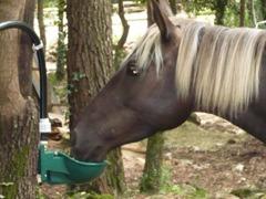 Abreuvoir chevaux et chiens